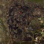 Valley of butterflies Rhodos